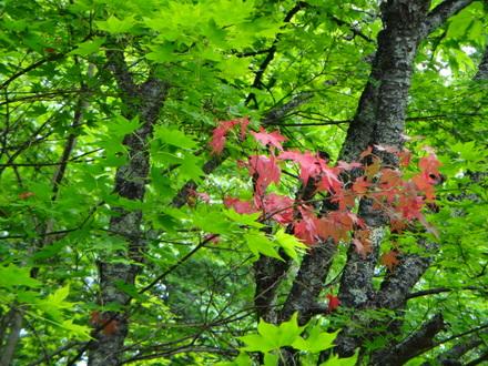 季節外れの紅葉