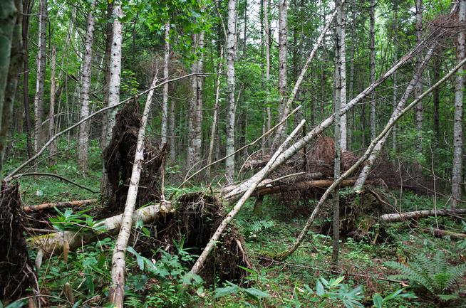 台風被害倒木
