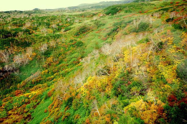 旭岳ロープウェイから眺める紅葉