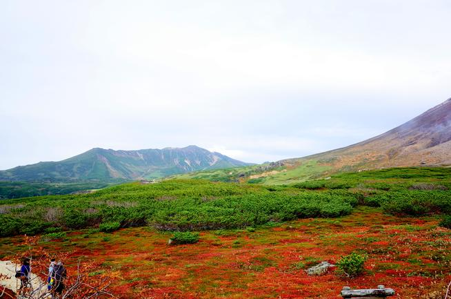 旭岳チングルマの紅葉