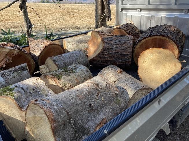 間伐作業の切り落とし