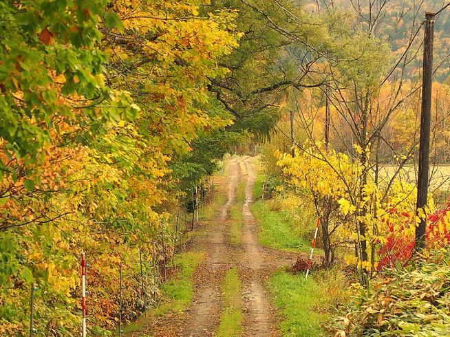 山荘へ続く道